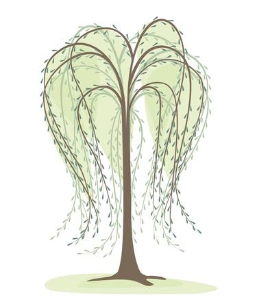 hoog gras: bladverliezende boom op een witte achtergrond, wilg