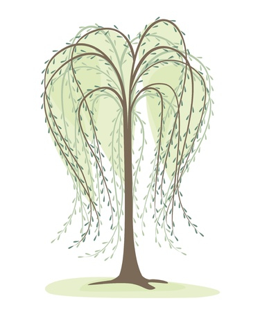 deciduous tree on a white background, willow Vector