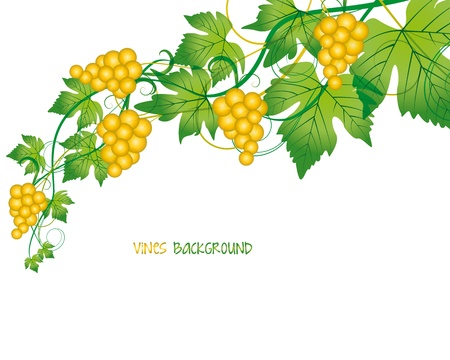 wine growing: branch with grapes on white background