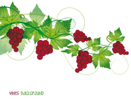 grapevine: Decorations of red grapes on a white background