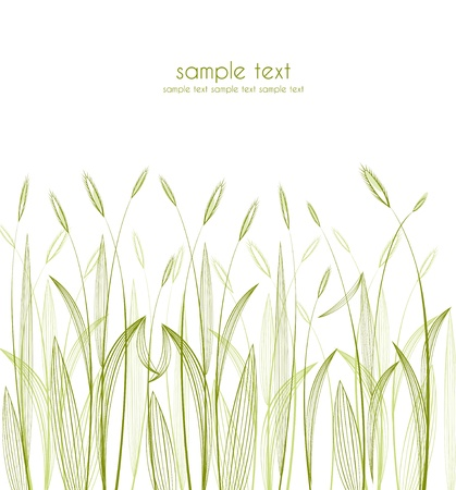 green grass silhouettes on white background Vector