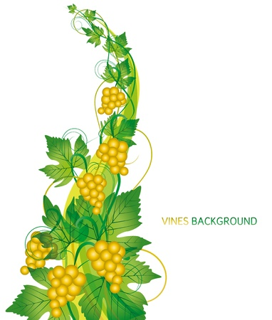branch with grapes on white background Stock Vector - 14323983