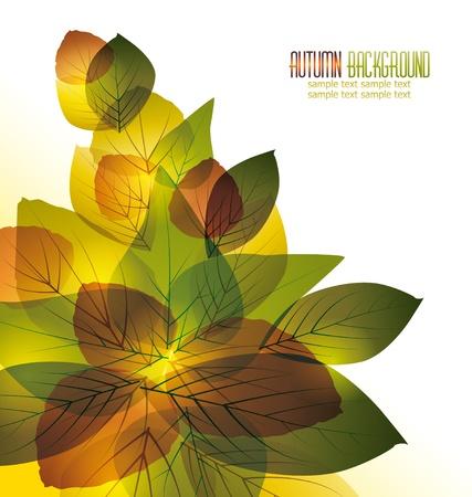 bladeren: Vector achtergrond met kleurrijke herfstbladeren