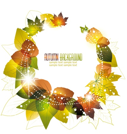 autumn leaves on white background Stock Vector - 14553296