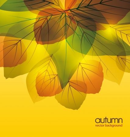 abstract background with colored leaves Stock Vector - 14553291