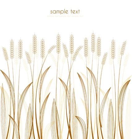 cereal grass on white background Vector