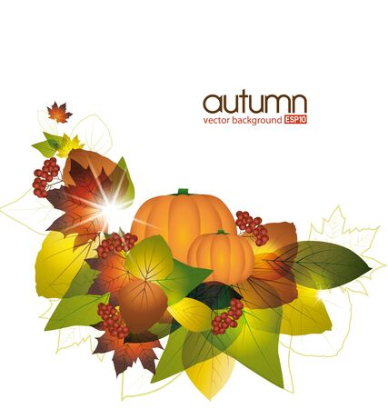 fall harvest: Pumpkins with fall leaves on white background