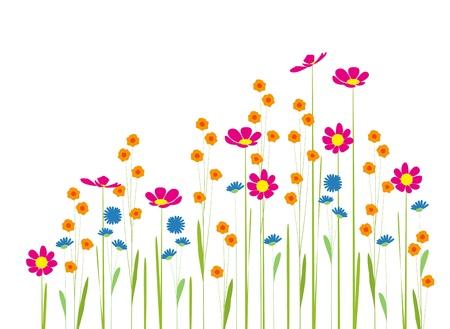 garden background: Flowers in the garden on a white background