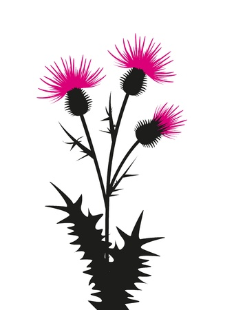 thistle silhouette on a white background Vector