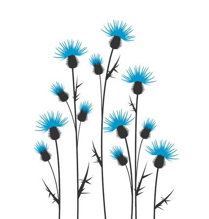 thistles silhouette on a white background Vector