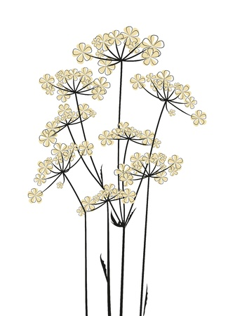 decorative pattern: Meadow flowers on a white background