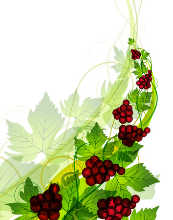 Decorations of red grapes on a white background Vector