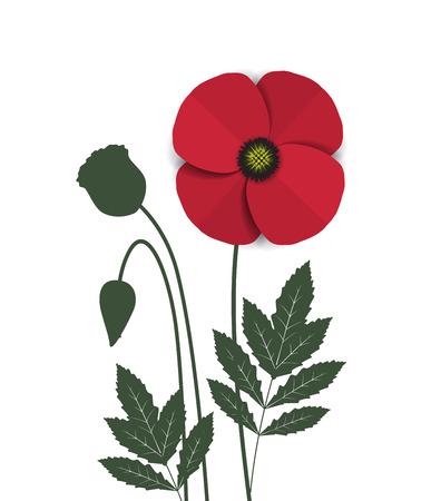 poppy flowers: Vector red romantic poppy flowers and grass Illustration