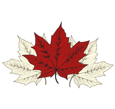 red leaves: Vector illustration of maple leaves on a white background