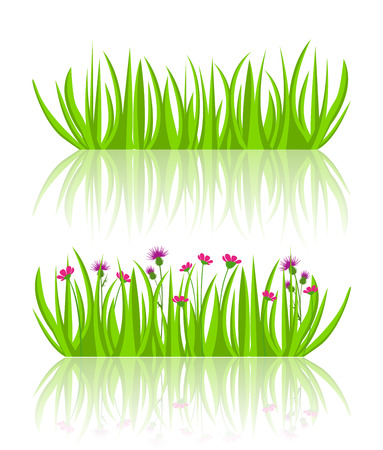 grass flowers: illustration of grass and flowers on a white background