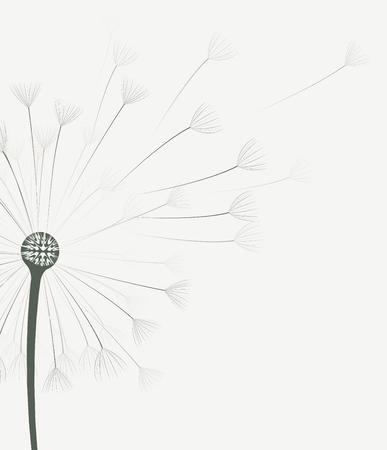 dandelion flower: illustration of dandelion flower in motion
