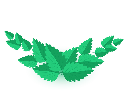mint leaves: Background with green mint leaves Vector Illustration