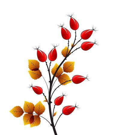 hip: Vector illustration rose hip, colorful autumn bush