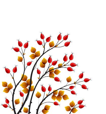 rose bush: Vector illustration rose hip, colorful autumn bush