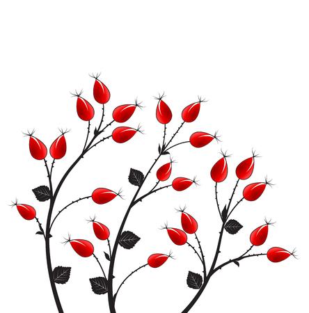rose bush: Vector illustration rose hip, silhouette autumn bush