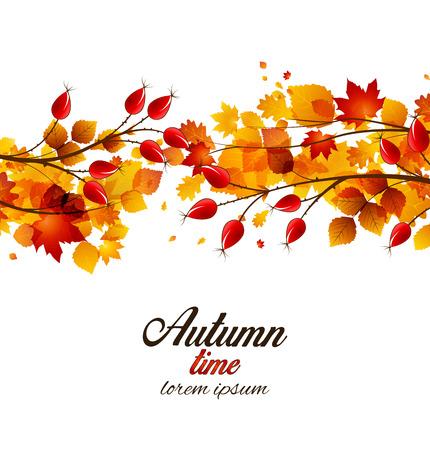 dog rose: Vector illustration rose hip and leaf, autumn bush