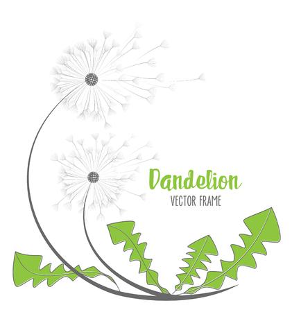 Vector dandelion flower Illustration