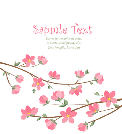 flower blooming: Spring sakura blossom