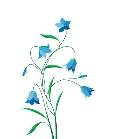 campanula: Summer flower campanula Illustration