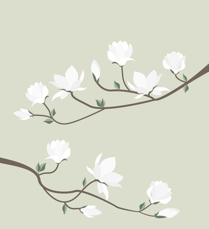 leaf: Vector magnolia flowers Illustration