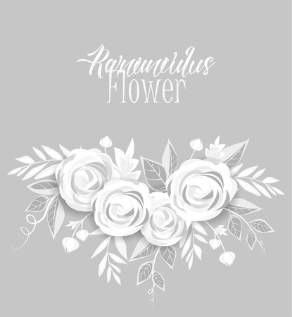 design elements: Vector ranunculus flower