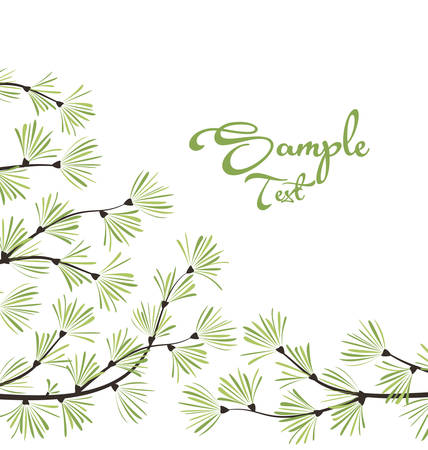 evergreen: Decoration of pine branches Illustration