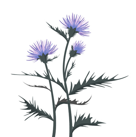 Thistle with leaves Stock Illustratie