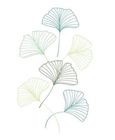 Ginkgo biloba leaves Vettoriali