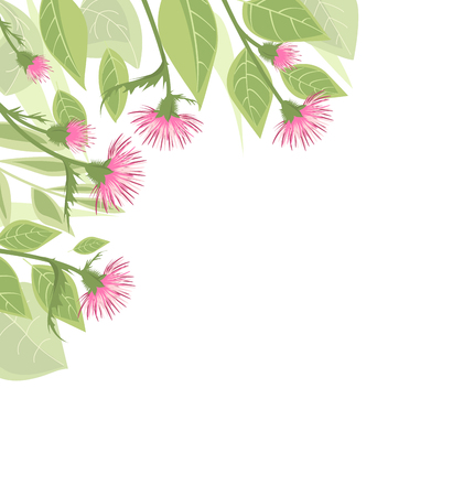 romance: Thistle with green leaves Illustration