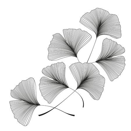Ginkgo biloba leaves 일러스트