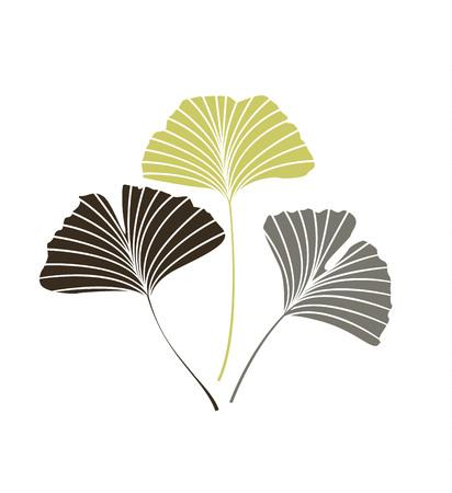 Vector Illustration ginkgo biloba leaves