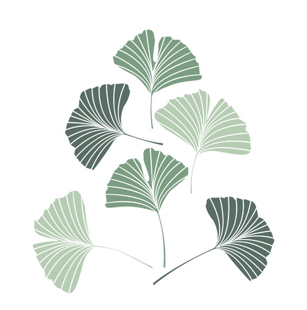 Vector Illustration ginkgo biloba leaves