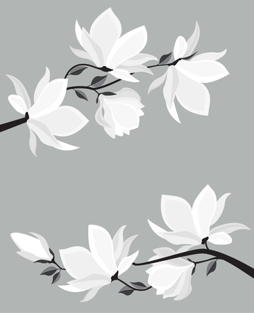 Branches with floral decoration vector illustration. Spring magnolia background with white flowers.