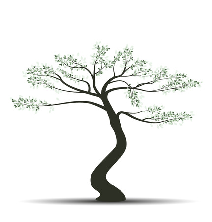 Vector illustration of tree with leaves on a white background. Bonsai