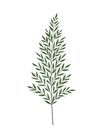 Vector illustration Silhouette leaves of fern. Green leaf Çizim