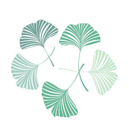 Vector Illustration ginkgo biloba leaves. Nature background