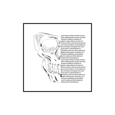 Vector black and white illustration of human skull with a lower jaw in ink hand drawn style. 矢量图像