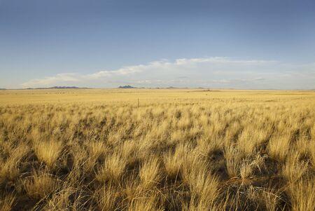 abandonment: grassland