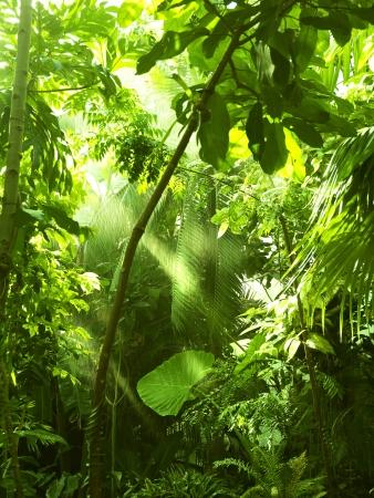 sfondo giungla: Foreste tropicali, alberi in luce del sole e la pioggia