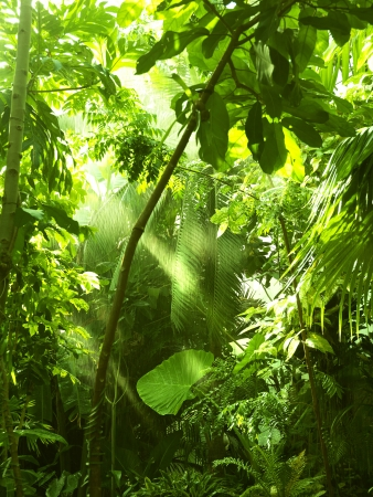 Tropical forest, trees in sunlight and rain photo