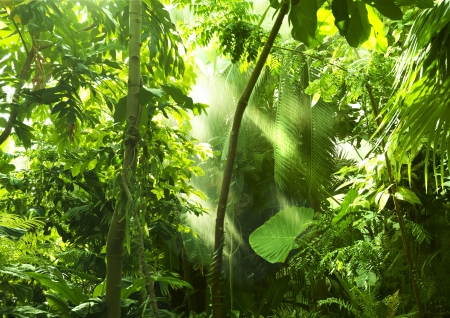rica: Tropical forest, trees in sunlight and rain