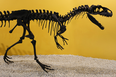 reconstructed: allosaurus fragilis skeleton head in front of a yellow background Stock Photo