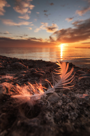A feather on the shore of Grado, lightened by the purple sunset.