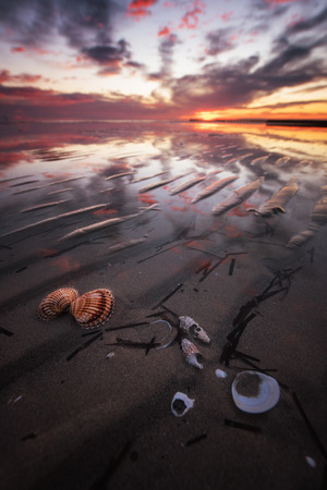 Shells in the sea of Grado, Italy, at sunset. Stockfoto