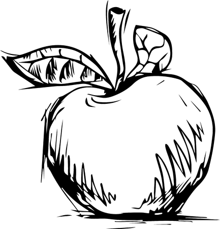 apple graphic sketch, vector, isolated on white